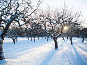 snow covered orchard https://www.woodlandtrust.org.uk/blogs/woodland-trust/2017/01/how-to-prune-apple-trees-in-winter/?utm_source=twitter&utm_medium=social&utm_campaign=blogs&utm_content=gardening